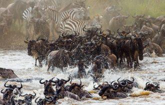 טיול לקניה בעונת הנדידה הגדולה