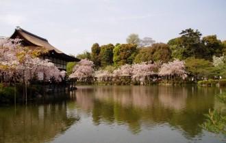 טיול מאורגן ליפן בתקופת פריחת הדובדבן וחג הפסח