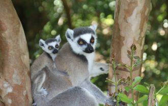 טיול למדגסקר בהדרכת דנדן בולוטין