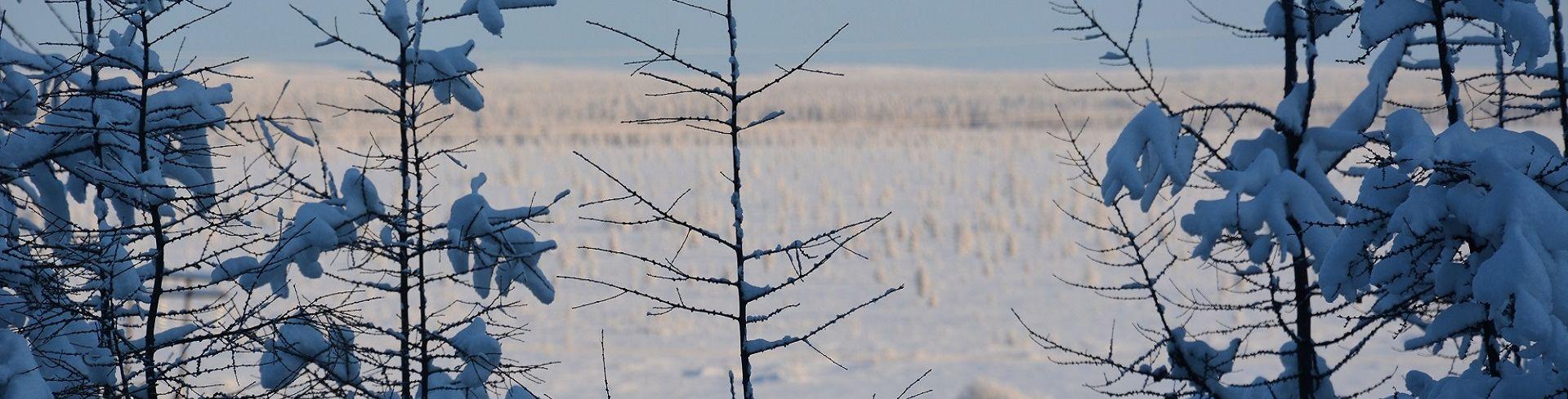 טיול לסיביר בשיא החורף