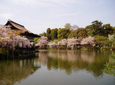 טיול עומק ליפן בתקופת פריחת הדובדבן