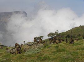 טרק באתיופיה להרי הסימיאן