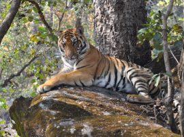 טיול להודו בדגש פארקים לאומיים ושמורות טבע