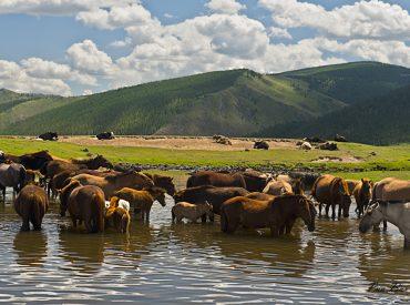 מונגוליה - הבא בתור הוא סוס