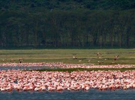 טיול צילום בקניה