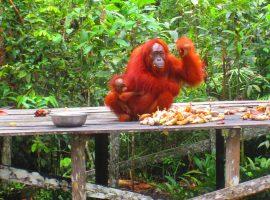 טיול לאינדונזיה בדגש שמורות טבע