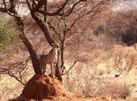טיול משפחות לקניה
