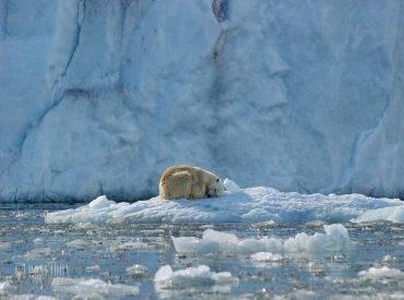 החוג הארקטי