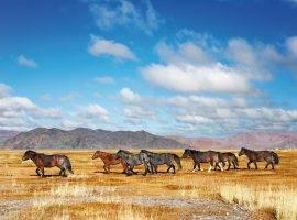 מונגוליה - ארץ השמיים הכחולים