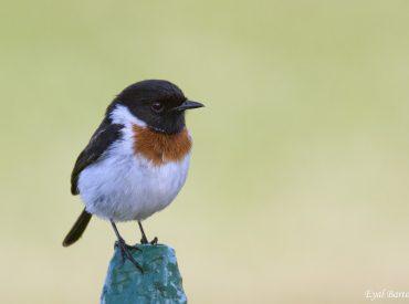 טיול לטנזניה בדגש ציפורים