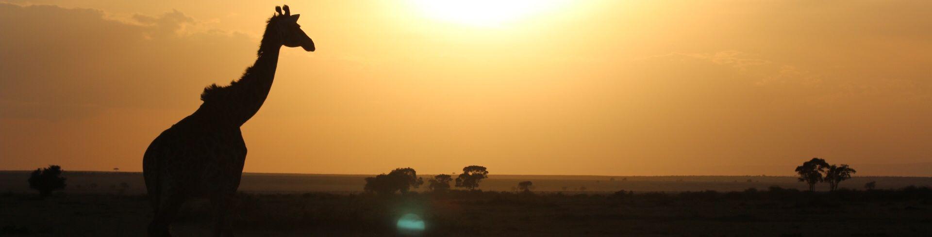 קניה בוקר במסאי מרה - אגדה אפריקאית