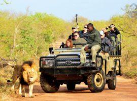 טיול ייחודי לדרום אפריקה