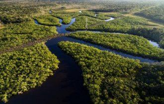 שייט בנהר האמזונס בהדרכת דנדן בולוטין